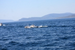 Dolphins in Clew Bay